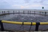Cage de pêche de HDPE/PE pour des poissons jeunes de poissons, flottement de cage de poissons