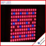 Le meilleur 600W large spectre DEL élèvent des lumières avec Veg/fleur