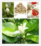 Extracteur de végétaux naturels en acier inoxydable pour Jasmine Extraction