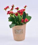 Бегония и одичалый цветок в бумажном баке с ярлыком