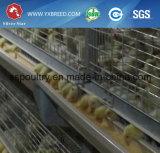 Tipo galvanizado longa vida de H que eleva a gaiola da galinha