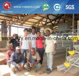 Cage argentée de poulet de couche de ferme avicole d'étoile