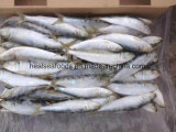 Sardinha clara do prendedor - peixe grande da sardinha