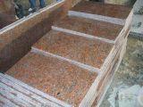 Mattonelle rosse del granito dell'acero del fornitore G562 dell'esportazione e dell'inclusione