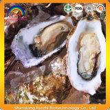 Естественный порошок выдержки устрицы ингридиентов продуктов моря