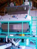 Машина селектора цвета сортировщицы/мозоли цвета кофейного зерна 2-3 тонн/часа имеет самое лучшее качество