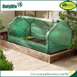 Onlylifeの庭の野菜は温室を育てる