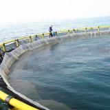 [هدب] يعوم سمكة يزرع قفص مصنع لأنّ [تيلبيا] ثقافة