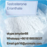 Testostérone stéroïde Enanthate 315-37-7 d'Enan d'essai de poudre de pente pharmaceutique