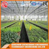 Kommerzielles Gemüsegarten-Polycarbonat-Blatt-Gewächshaus