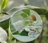 La naturaleza pura del 70%, el 80% aceite de eucalipto