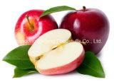 Pomme de gala fraîche de fruit 2015