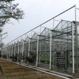 Парник Multi-Пяди поставщика Китая стеклянный для горячего сбывания