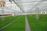 Folha de policarbonato do tipo de Venlo agrícolas das emissões