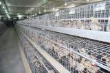 가금 농장을%s 자동적인 어린 암탉 병아리 감금소 장비