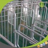 Bonne stalle en acier galvanisée de gestation de porc de Quatlity