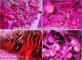 Preiswerter Best Indoor Garten Plant 430W LED Growlight Hydroponic