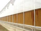 Effet de serre de l'eau de refroidissement évaporatif tampon humide mur dans l'Australie