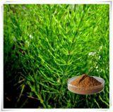 Estratto puro organico naturale del Horsetail di 100%, silicone organico