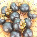 Vendi alta simulazione di mangostano frutta artificiale