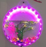 Petite cuvette acrylique montée montée de poissons