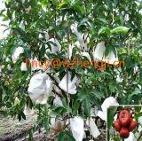 Degradáveis Ss Spunbond Nonwoven Fabric para a agricultura