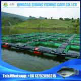 ugandaビクトリア湖のイズミダイの栽培漁業装置