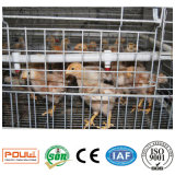 Гальванизированная клетка слоя Breeding фермы цыпленка малая с автоматический подавать