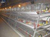 Le poulet galvanisé plongé chaud de poulette de ferme avicole met en cage le matériel à vendre (un type le bâti)