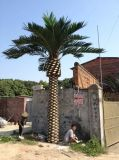 Piante e fiori artificiali della palma da datteri Gu-SL909167