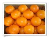 Frische Navel-Orange