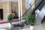 35 grados de escaleras mecánicas para Shoppong Mall