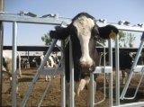 Ближний свет с возможностью горячей замены панелей Headlock оцинкованного крупного рогатого скота