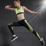 Haute qualité Femmes Leggings Fitness Bra Gym Wear