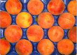Wegwerfplastik pp., der Tellersegmente für Obst und Gemüse verpackt
