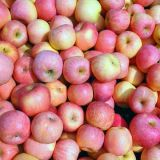 Shandong Rode Verse FUJI Apple