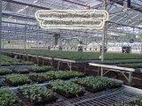 Лист из поликарбоната выбросов парниковых газов на стенде цветов