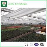Novo tipo estufa de vidro para Growing do vegetal e de flores