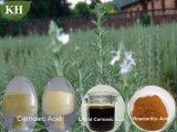 Extrato de alecrim, ácido Carnosic 80% Ácido Rosmarinic 98%