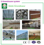 Invernadero caliente de la alta calidad de la venta