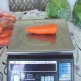 300-350g nuevo cultivo de zanahoria fresco chino