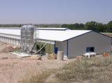 Estructura de acero derramada Diseño granja avícola arrojar el pollo de la capa de casa en venta