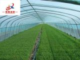 Овощной растущей пластмассовый туннель парниковых
