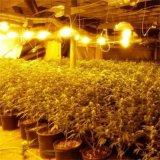 El ahorro LED de Energry del poder más elevado crece el espectro completo de la lámpara ligera para la planta