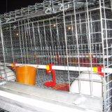 Granja de Pullet automático de jaulas en batería Pullet elevando la jaula de pollo