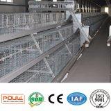 Cage automatique de poulet à rôtir de couche de modèle de batterie de matériel de ferme avicole/