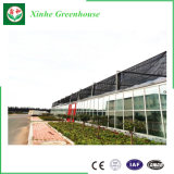 Nuevo tipo invernadero de cristal para Growing del vehículo y de flores