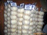Aglio bianco puro di buona qualità dell'esportazione