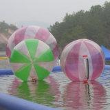 ماء قابل للنفخ يمشي كرة في البركة