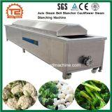 Equipamento de processamento de vegetais Auto Correia Vapor Blancher Couve-Máquina de branqueamento de Vapor